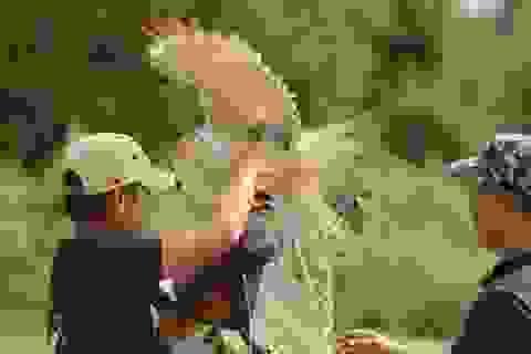 """Khi """"thú cưng"""" là chim săn mồi: Nghề chơi cũng lắm công phu"""