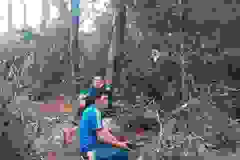 Phát hiện thi thể người đàn ông phân hủy trong rừng thông