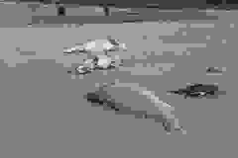 Vụ cá chết hàng loạt: Ngư dân tự lặn biển truy tìm nguồn xả thải độc