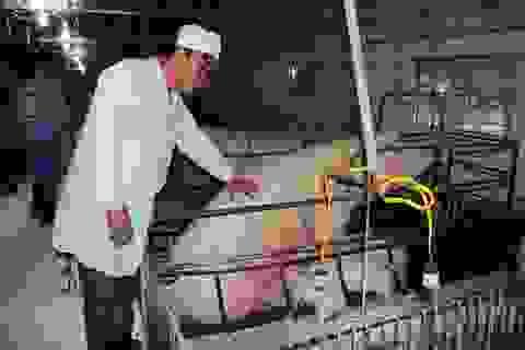 Từ tay trắng sở hữu trang trại cho thu nhập tiền tỷ