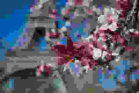 Vẻ đẹp mùa xuân trên khắp thế giới