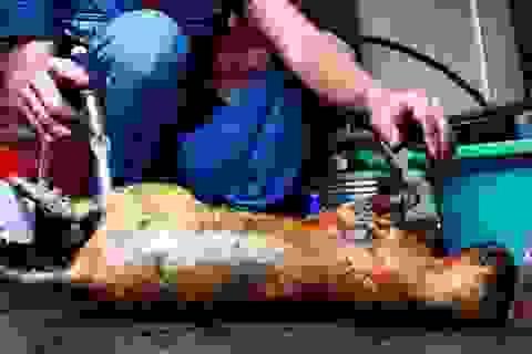 Chuyện người Việt Nam ăn thịt mèo lại lên báo Anh