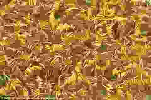 2.000 sợi vàng có niên đại gần 3.000 năm vừa được tìm thấy