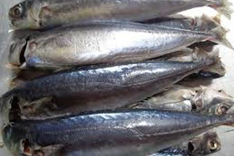 Các chuyên gia thống nhất chất phenol trong cá nục không nguy hại sức khoẻ