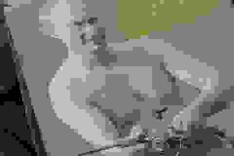 Tổng thống Putin khoe vẻ phong trần trong bộ lịch 2016