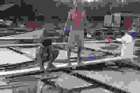 """Cá bè ở Đồng Nai cũng """"thi nhau"""" chết trắng"""