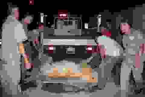 Hy hữu: Ô tô tông ngựa trên phố