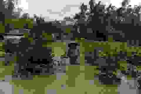 10 nghìn cây mai ngâm mình trong nước, chết mòn sau lũ