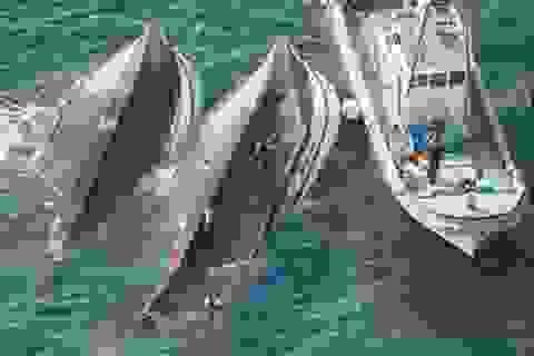 Nhật bắt giữ thuyền trưởng tàu Đài Loan