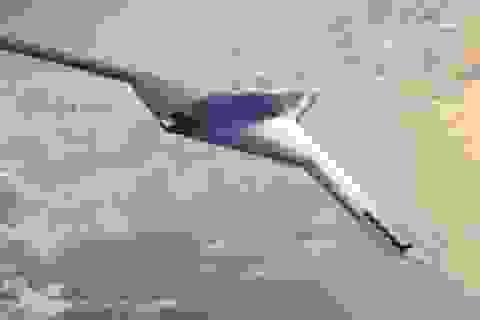 Mỹ bí mật phát triển máy bay không người lái tàng hình siêu việt