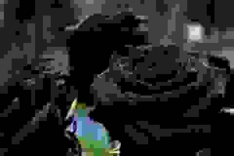 Hoa hồng đen quý hiếm ở Thổ Nhĩ Kỳ