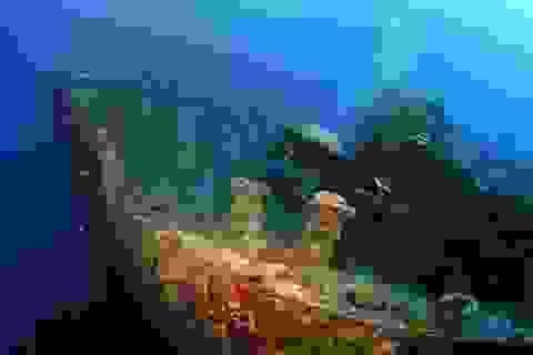 Tàu chở vũ khí ngủ yên dưới đáy Biển Đỏ