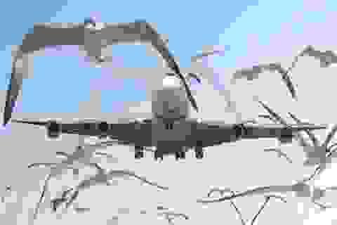 Chế được phi cơ tự bay như đàn chim