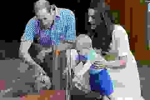 Hoàng tử bé nước Anh nhoài người sờ thú túi