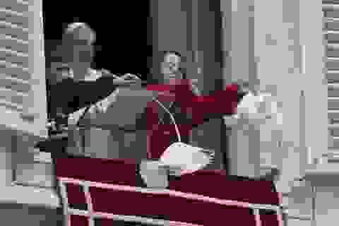 Vatican dùng chim ưng để bảo vệ bồ câu của Giáo hoàng