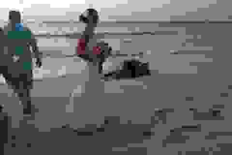 Rùa biển khổng lồ đẻ trứng ngay tại lễ cưới