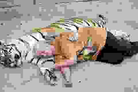 Cặp vợ chồng sống chung cùng đôi hổ Bengal nặng gần 300 kg