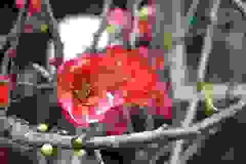 Ngắm muôn sắc ngày xuân ở chợ hoa Đà Nẵng