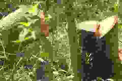 Bình Định: Ngang nhiên phá rừng, lấn chiếm đất rừng phòng hộ