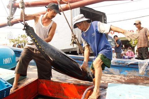 Sau vụ cá chết, thương lái giở trò ép giá cá ngừ đại dương