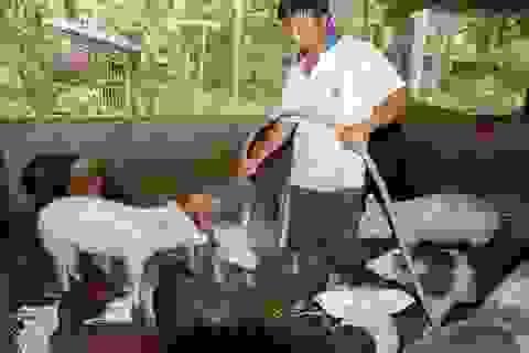 Bình Định: Người dân nói không với sử dụng chất cấm trong chăn nuôi