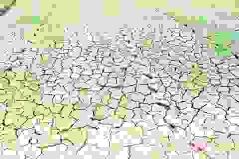 Ruộng đồng bỏ hoang vì thiếu nước, nông dân lại lo đói