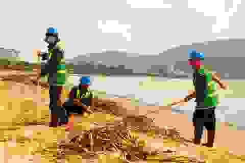 Bèo, rác ngập bãi biển Quy Nhơn sau lũ