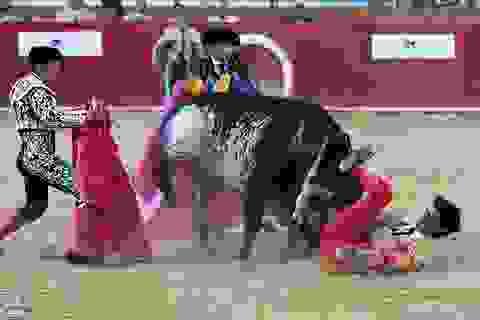 Kinh hoàng cảnh đấu sĩ Tây Ban Nha bị bò tót húc chết trên truyền hình trực tiếp