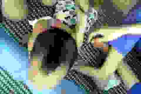 Vụ trẻ bị cô giáo trói tay chân: Xử phạt 22,5 triệu đồng, giải thể Mầm non Sơn Ca