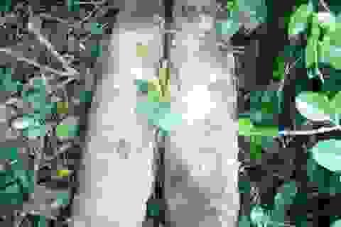 Phát hiện 3 quả đạn pháo trong rừng
