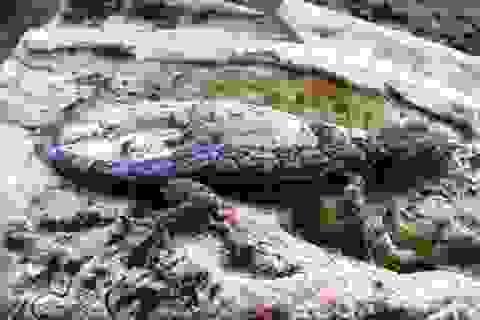 Công bố 28 loài động, thực vật chỉ tồn tại ở Phong Nha - Kẻ Bàng