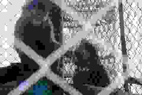 Thả hàng chục cá thể động vật quý hiếm về VQG Phong Nha – Kẻ Bàng