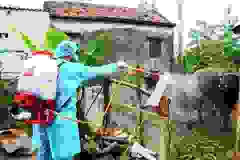 Quảng Bình: Dập tắt ổ dịch lở mồm long móng ở đàn gia súc