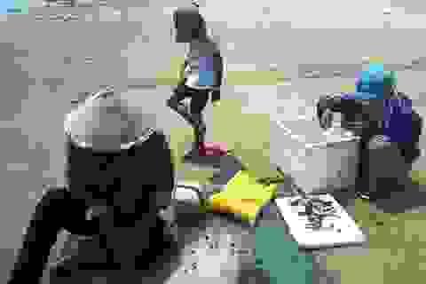Bắt quả tang thương lái thu mua gần 1 tấn cá chết