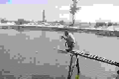 Quảng Bình: Thoát nghèo nhờ nuôi tôm trên cát