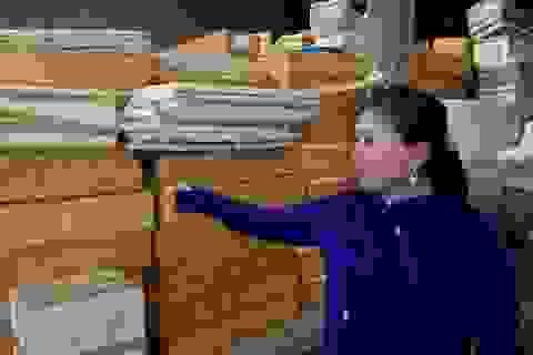 Quảng Bình: Tăng cường giám sát, xét nghiệm hải sản