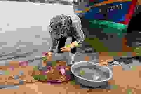 """Dân hoang mang sau khuyến cáo """"không sử dụng một số loại hải sản"""""""