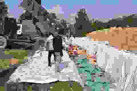 Quảng Bình: Tiêu hủy hơn 600 tấn hải sản có hàm lượng Cadimi vượt ngưỡng