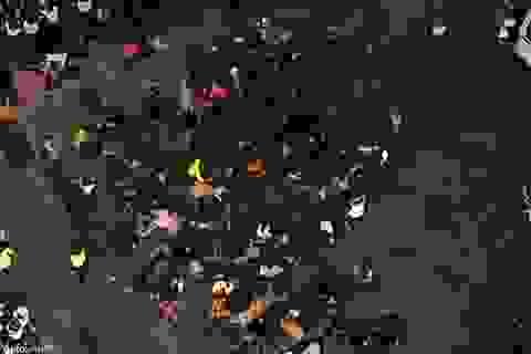 Giẫm đạp ở Thượng Hải: Cảnh tượng khủng khiếp giống cơn ác mộng