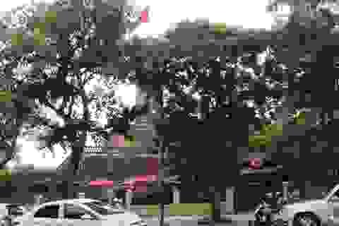 """Hệ thống bảo tàng ở Việt Nam, """"nàng công chúa"""" ngủ... mãi trong rừng!"""