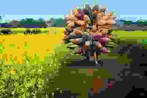 Khoảnh khắc ấn tượng của nhiếp ảnh Việt Nam trên báo quốc tế 2015
