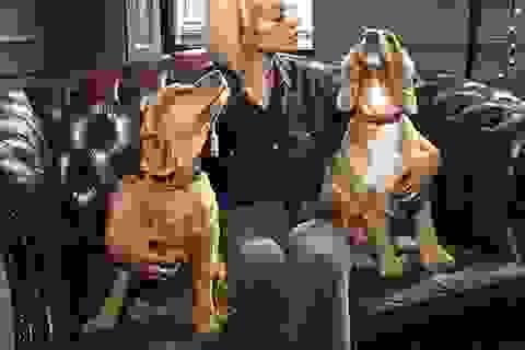Nghệ sĩ quốc tế lên tiếng đòi chấm dứt lễ hội ăn thịt chó ở Trung Quốc