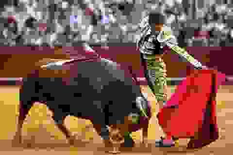 Bàng hoàng chứng kiến người đấu bò đầu tiên thiệt mạng trong thế kỷ 21