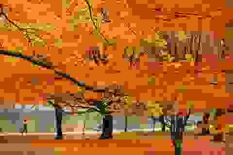 Những khoảnh khắc cuối cùng của mùa thu trên thế giới