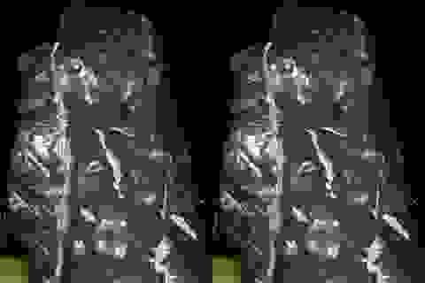 Cung tiến đá quý nặng 40 tấn cho Quảng trường Hồ Chí Minh
