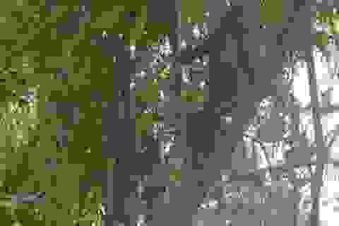 Thả 4 cá thể khỉ mặt đỏ về môi trường tự nhiên