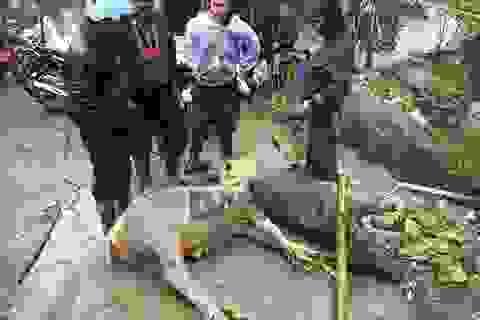 """Hơn 7.000 con gia súc chết trong đợt """"siêu rét"""""""