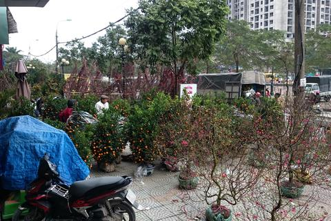 """Hà Nội: Dân chung cư bức xúc vì đào, quất """"bao vây"""" tòa nhà"""