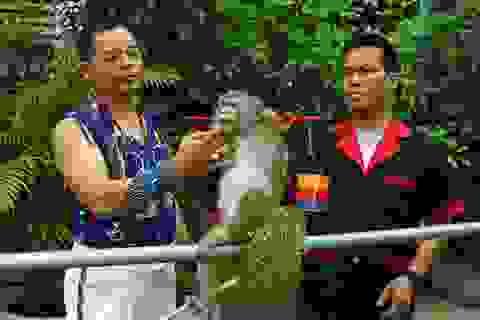 Gặp người 30 năm dạy khỉ làm được như... người