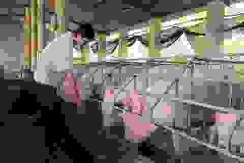 Tăng giới hạn xác định tồn dư chất cấm trong chăn nuôi